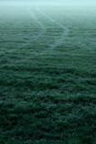 Tire tracks in misty meadow. - 265638523