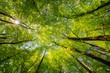 Leinwanddruck Bild - tree in forest
