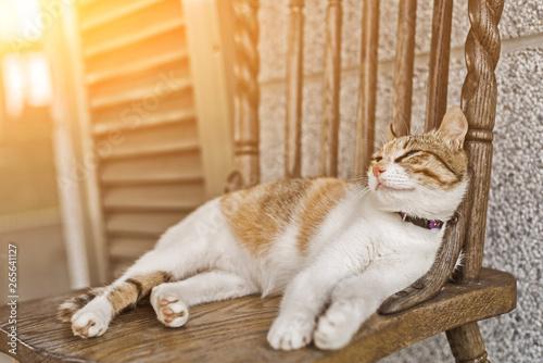 Fototapeta young cat sleep