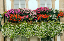 Windows With Flowers In The Balcony In A Wall