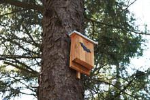 Bat Box In Tree - Wildlife Con...