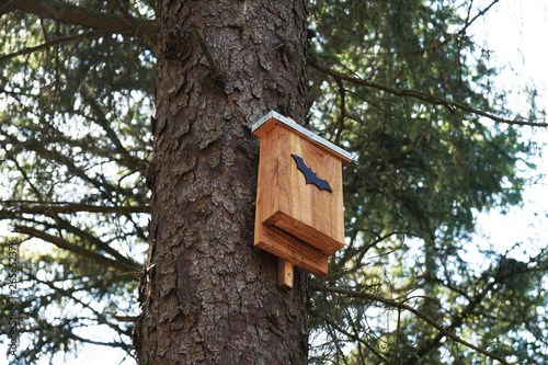 Canvas Print bat box in tree - wildlife conservation in nature reserve forest