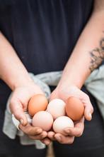 Hands Holding Fresh Eggs