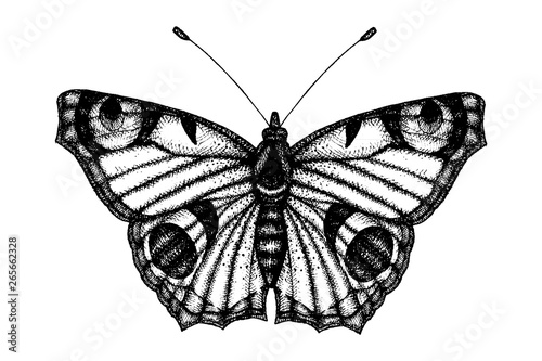 Photo sur Toile Papillons dans Grunge Black and white vector illustration of a butterfly. Hand drawn insect sketch. Detailed graphic drawing of wall brown in vintage style.