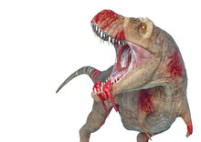 Tyrannosaurus Rex In White Background