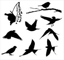 Song Birds Silhouettes