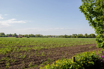 Fototapeta na wymiar Green meadow farm field in the spring, agricultural with tractor farming