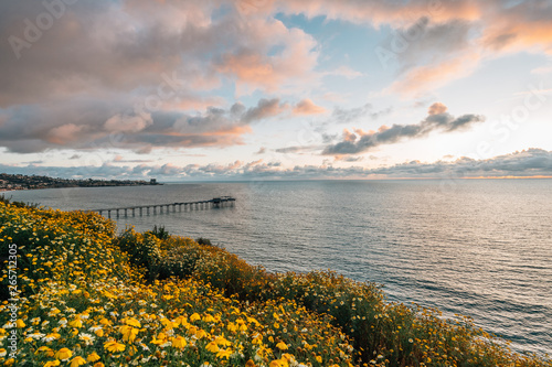 Flowers and view of Scripps Pier at sunset  in La Jolla, San Diego, California Canvas-taulu