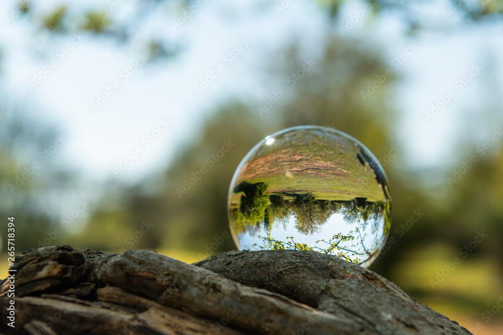 Fototapeta A glass ball lying on a branch of a tree