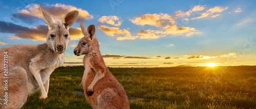 Spoed Foto op Canvas Kangoeroe kangaroo with sunset Australia outback