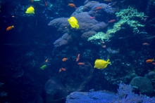 Variety Of Colorful Fish Swimm...