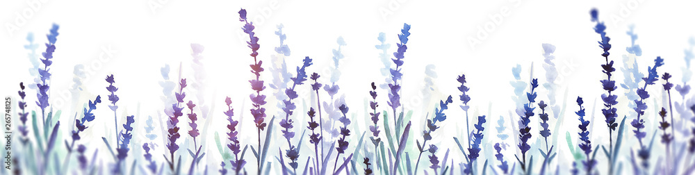 Fototapety, obrazy: lavender watercolor banner. hand drawn illustration. flower field.
