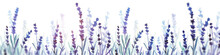 Lavender Watercolor Banner. Ha...