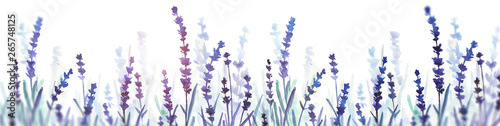 Fototapeta lavender watercolor banner. hand drawn illustration. flower field. obraz