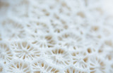 Abstract Seashell blurred background.Backdrop with copy cpace for webdesign. - 265755755