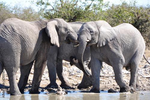 Namibia: A Herd of elephants at the Halali waterhole in Etosha Salt pans Canvas Print