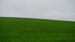 Leinwandbild Motiv Agricultural green field of wheat and sky.