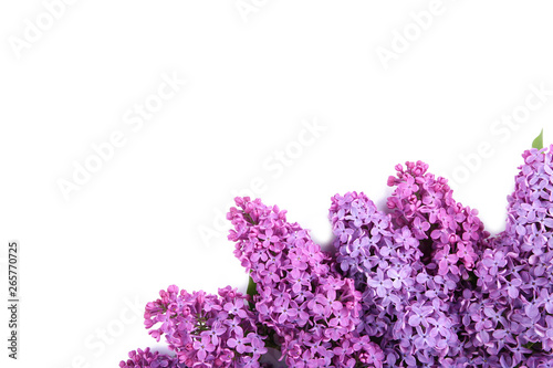 Papiers peints Lilac Lilac flowers branch isolated on white background with sample text