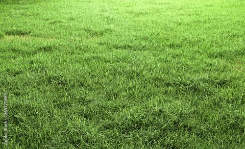 Fotografía Green grass field