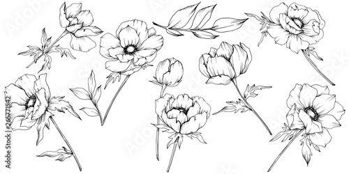Leinwand Poster Vector Anemone floral botanical flowers