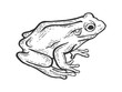 Frog toad animal sketch engraving vector illustration. Scratch board style imitation. Black and white hand drawn image.