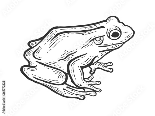 Fotografiet Frog toad animal sketch engraving vector illustration