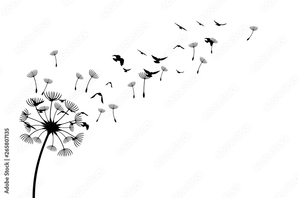 Fototapety, obrazy: Dandelion with flying birds and seeds. Vector isolated decoration element from scattered silhouettes. Conceptual illustration of freedom and serenity.