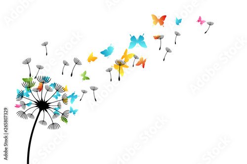 Fototapeta  Dandelion with flying butterflies and seeds