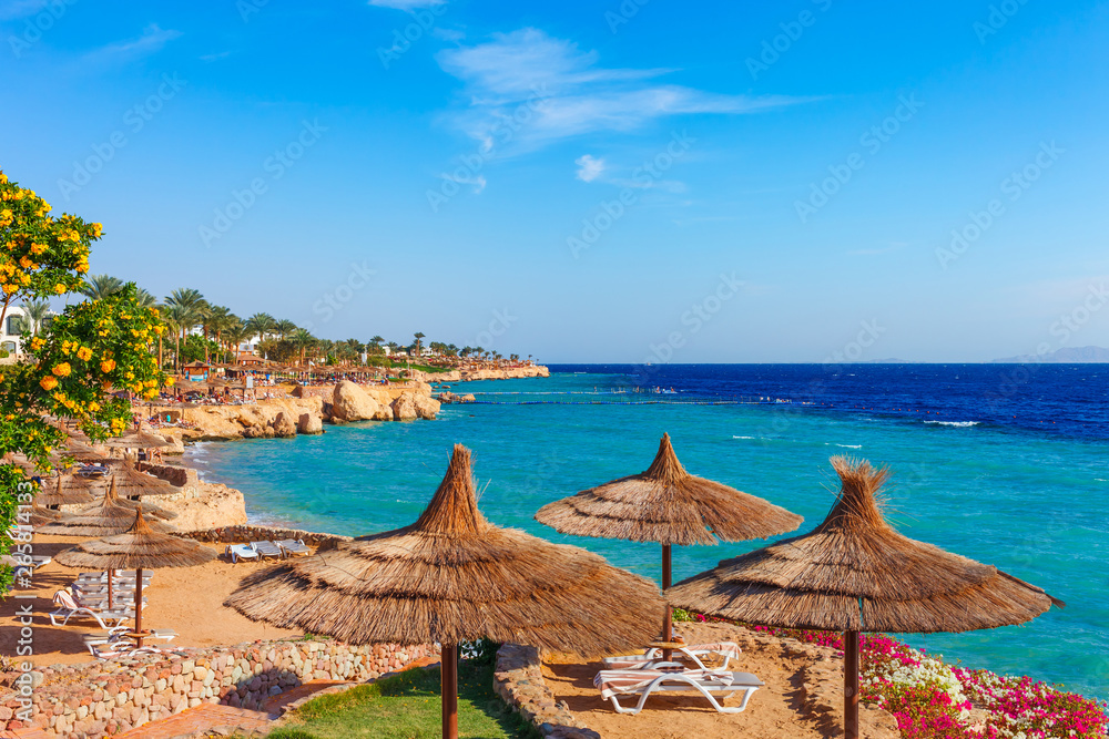 Fototapeta Sunny resort beach with palm tree at the coast shore of Red Sea in Sharm el Sheikh, Sinai, Egypt, Asia in summer hot. Bright sunny light