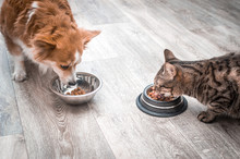 Dog And A Cat Are Eating Toget...