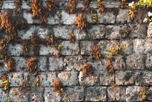 Antic Wall Texture With Moss And Plants Ivy, Italy Mountains Street Concept