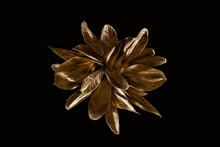 Top View Of Golden Shiny Metal Flower Isolated On Black