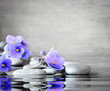 Blue flower and stone zen spa on grey background