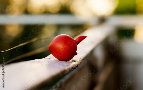 Funny red tomato with appendage placed on balcony railing, selective focus, limi Wallpaper Mural