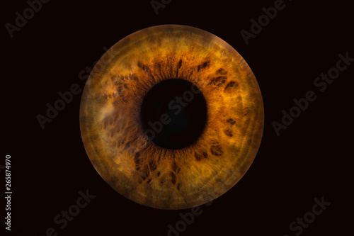 Human brown grey eye iris. Pupil in macro on black background Canvas Print