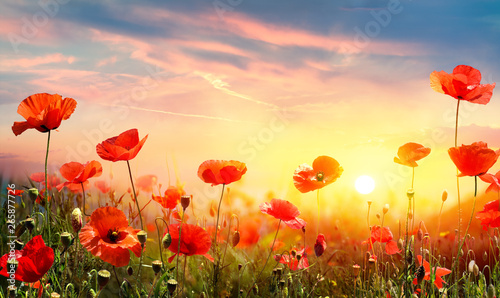 Tuinposter Zwavel geel Poppies In Field At Sunset