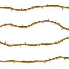 Set Of Realistic Thorns Isolated On White Background, Vector EPS 10 Illustration