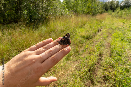 Spoed Foto op Canvas Olijfboom Beauty butterfly on hand with blurred background. Butterfly closeup. Nature. Macro.