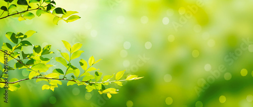 Summer green leaves on a shiny background