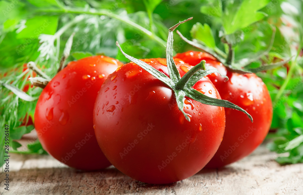 Fototapety, obrazy: Red tomatoes and green herbs, close up, macro shot, selective focus