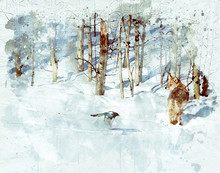 Watercolor Of A Winter Scene Of A Single Coyote In The Woods, Looking At A Magpie Bird Fly By To Tease Him