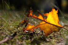 Rest Vom Herbstblatt