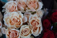 Classy Wedding Roses