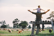 Father And Son In Sheep Farm