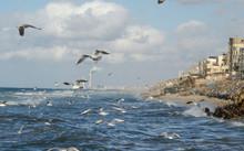 Seagulls Fly Over The Mediterranean Sea , Along The Coast Off The Shati Gaza Strip.