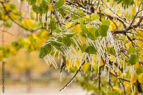 In de dag Begraafplaats Icicles on the green leafs