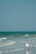 Seagull On The Beach In Goa Lo...