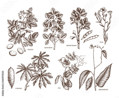 Hand drawn agricultural plants set Wallpaper Mural