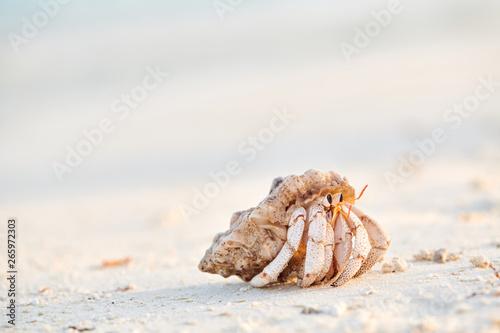 Foto Hermit Crab on a beach