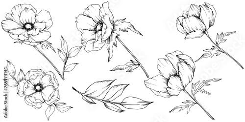 Fotografía Vector Anemone floral botanical flowers